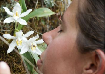 One must take time to smell the orchids...