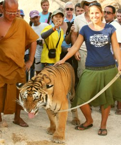 Walking with tigers, so cool!