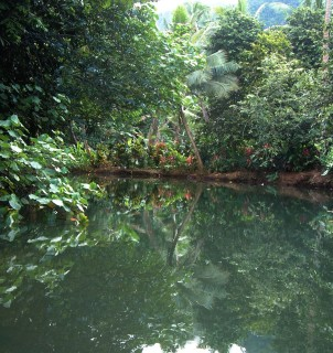 Still reflections and lush forest on the Apoomau River, Raiatea