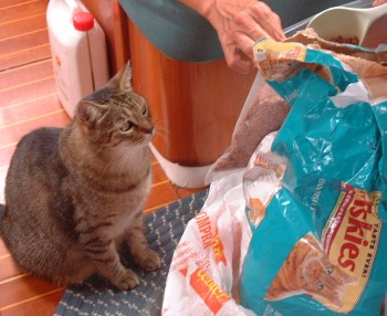 Preparing to seal cat food into vacuum bags.