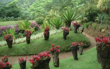 La Balata Botanical Garden, Martinique