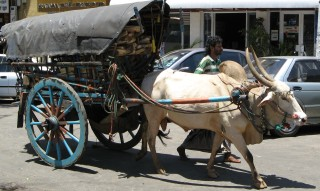 Bare feet, and bullock carts in Kandy