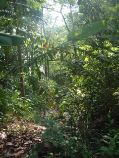 Hiking through the Panamanian Jungle!