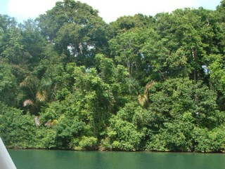 The wild banks of the Chagres River