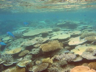 The marine reserve around Treasure Island provides great snorkeling and diving.