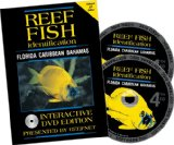 "Look at ""Caribbean Reef Fish Identification:"" on Amazon"
