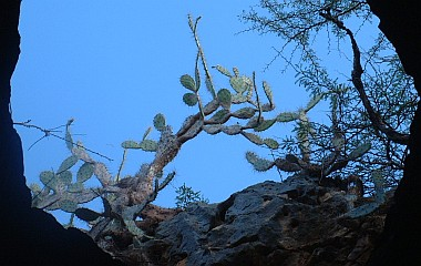Prickly Pear and thorn trees, Curacao