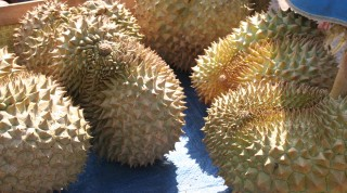 Soccer-ball sized durians with a world-size stink