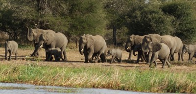Elephants of all sizes at the waterhole, Kruger Park