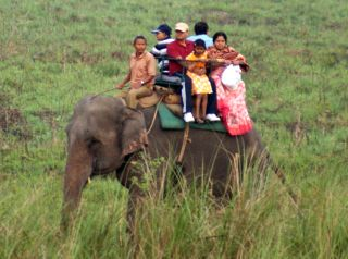 Elephant safaris are good for wildlife sighting, Jaldapara, West Bengal, India