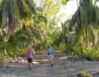 Exploring the old copra track on Farquhar Atoll