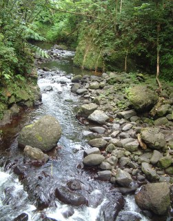 Fautaua River runs through lush forest within walking distance of Papeete