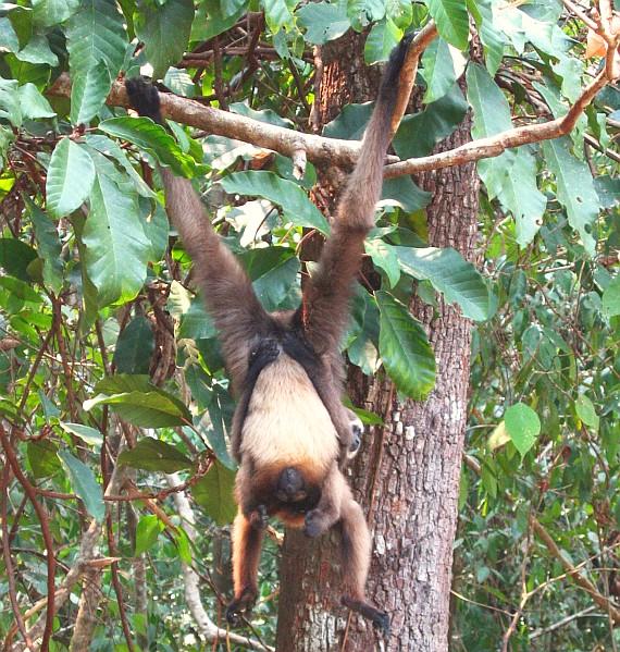 Southeast Asia Primates