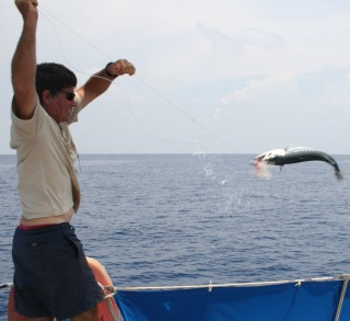 Jon lands a nice barracuda off Addu Atoll, Maldives. No ciguatera here.