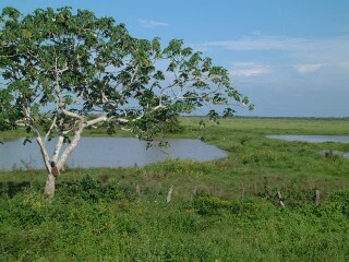 Water and grass-lands, typical of Los Llanos