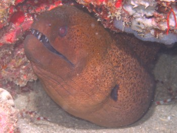 We saw some great Moray eels