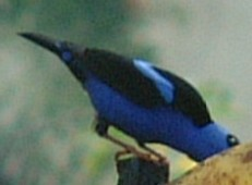 Unknown Panamanian bird