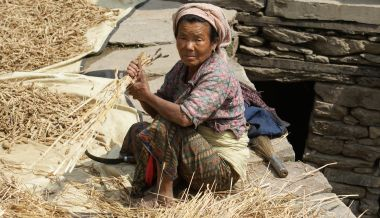Rai woman harvesting wheat by hand