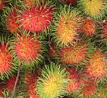 The fruit of the Rambutan is sweet