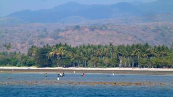 Local villagers harvesting the reef at Kilo