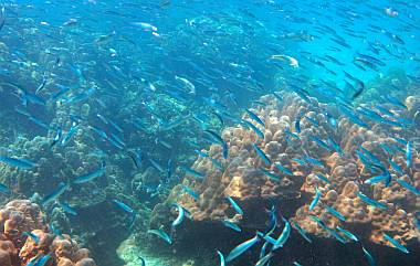 Schooling fish and bright coral abound at Ko Rok