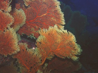 A colorful feast of sea fans in the grotto