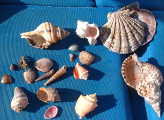 Some of the shells we've collected over the months