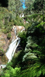 Steavenson Falls slices through lush forest east of Melbourne