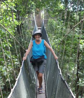 In the Borneo rainforest canopy, Poring Hot Springs, Malaysia