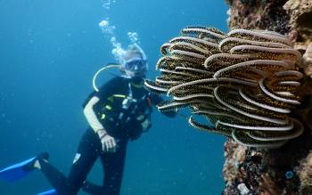 Sue dives White Rock with bright crinoids