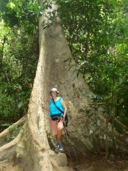 Rainforest tree with massive buttressed root system