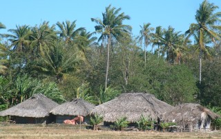 Typical Timorese homes in the countryside